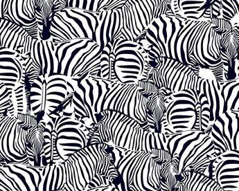 Little Johnny - Zebras Digital Cotton