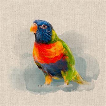 Rainbow Parrot Panels