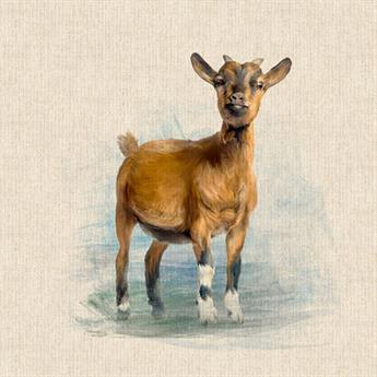 Goat Panel