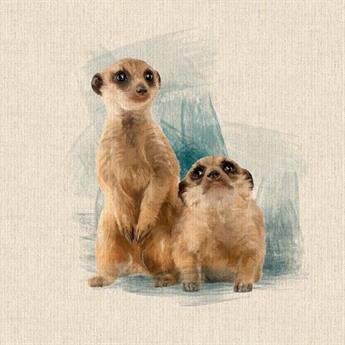 Meerkat Panel