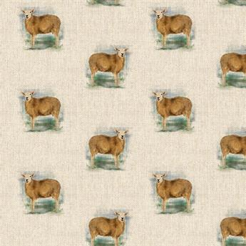 Farm Sheep All Over