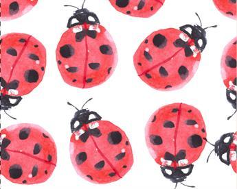 Little Johnny - Watercolour Ladybirds Cotton